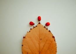 泛黄的树叶图片(11张)