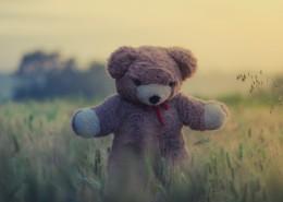 可爱的泰迪熊玩具图片(10张)