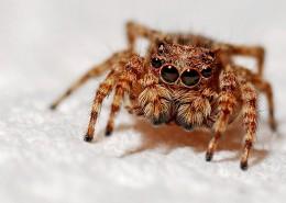 毛茸茸的蜘蛛图片(10张)