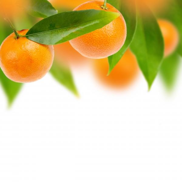 橙子和橘子的图片(15张)-26abc图片大全