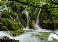 流淌于山中林间的溪流瀑布
