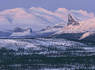 唯美树林雪景风景图片清新迷人
