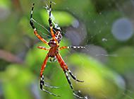 彩色可爱的蜘蛛高清图片