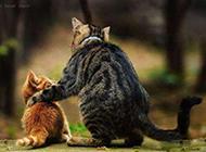 动物囧图图片之你要听话哟