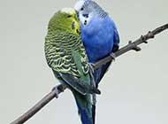 动物超温馨亲吻高清图片欣赏