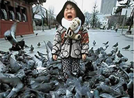 当鸽群围上小女孩 吓哭了
