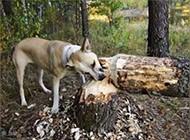 口味独特的搞笑狗狗图片