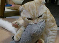 恶搞猫咪表情图片十分逗趣