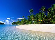 海滨沙滩椰林绿色唯美图片