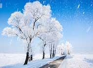 雾凇美景领略冬季的美丽