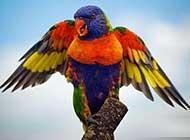 羽毛艳丽的小鸟清新自然高清图集