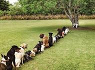 有素质会排队的可爱狗狗