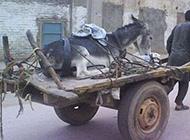 驴的最高待遇搞笑奇葩图片