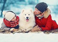 白色萨摩耶犬可爱风格图片壁纸