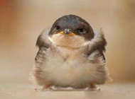 可爱动物搞笑图片之愤怒的小鸟