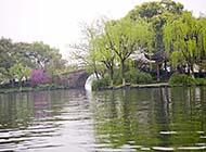 水乡之称苏州湖畔杨柳风景图片
