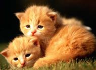 小猫咪高清图片特写可爱萌人
