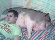 养猪的好处搞笑图片