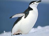 企鹅长颈鹿高清动物组图合集