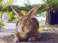高清呆萌兔子图片动物桌面壁纸