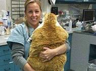 美女抱奇葩胖猫咪图片