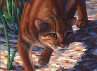 野生金猫霸气彩绘图片