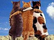 二货猫咪图片之兄弟同心
