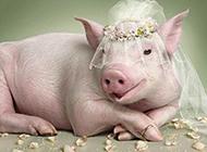 小猪的婚纱照出炉啦