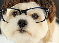 饱读诗书的狗狗