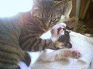 屌丝猫超恶眼神图片