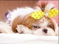 超可爱狗狗高清图片