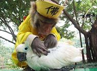 出超搞笑动物图片之家了的猴