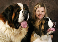 巨型圣伯纳犬吐舌卖萌可爱图片分享