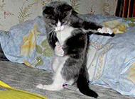 猫咪跳舞搞笑内涵图片