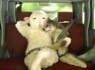 当羊成了富翁后搞笑图