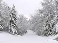 乡村林间冰雪覆盖的道路唯美图片