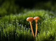 清新养眼小蘑菇精美壁纸