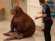可爱搞笑动物图片之让我歇会儿