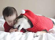 萌宝宝和可爱狗狗唯美图片