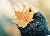 浪漫秋天风景旳桌面壁纸