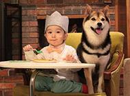 可爱柴犬与宝贝友爱伙伴萌图秀