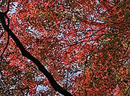 日本的下鸭神社红叶摄影组图