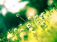 浪漫唯美意境鲜花风景图片壁纸