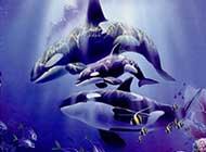 海洋动物 巨型鲸鱼