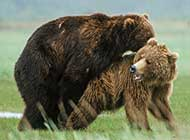 可爱熊的生活