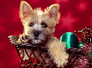 乖巧可爱的萌狗狗图片精选