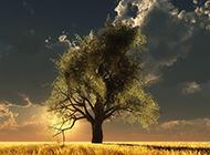 晨曦朝霞中的树木美丽风景