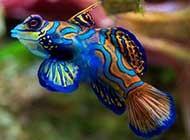 炫彩斑斓的动物合集