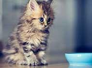 调皮任性的小萌猫高清桌面壁纸