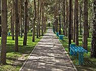 夏天午后的树林道路风景图片